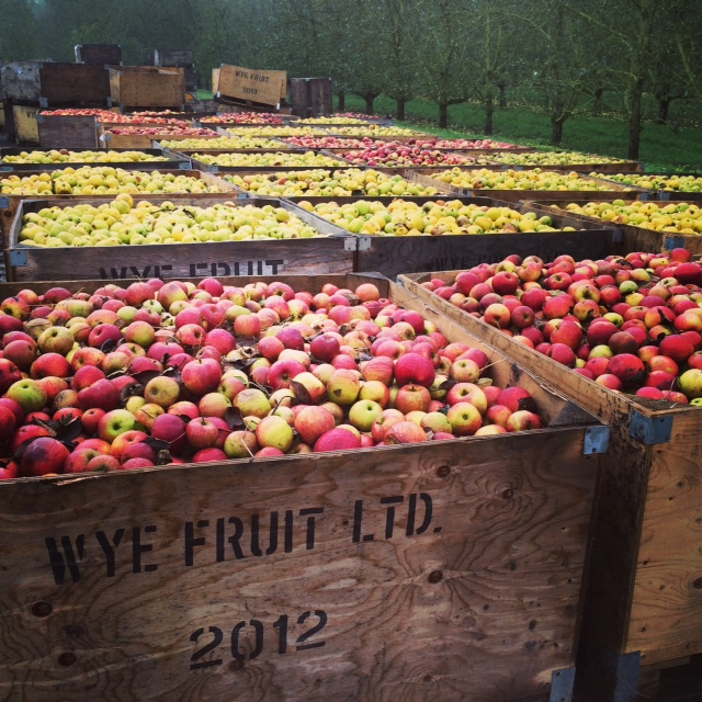 herefordshire apples
