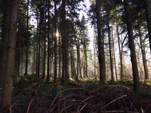 credenhill park woods 3